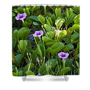 Railroad Vine Shower Curtain