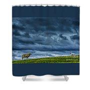 Rain Storm Ewe And Lamb Shower Curtain