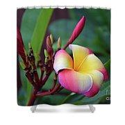 Rainbow Plumeria Shower Curtain