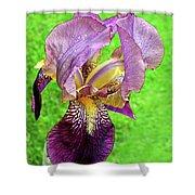 Raindrops On Purple And Yellow Iris Shower Curtain