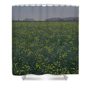 Rapeseed Dawn Shower Curtain