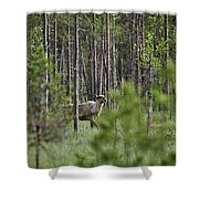 Rare And Wild. Finnish Forest Reindeer Shower Curtain