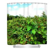Raspberry Fields 2  Shower Curtain