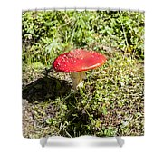 Red And White Potted Toadstool Shower Curtain