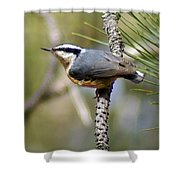 Red Breasted Nuthatch Shower Curtain