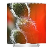 Red Corn Poppy Bud And Red Dots Shower Curtain