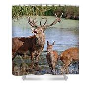 Red Deer In Bushy Park London Shower Curtain