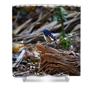 Red-flanked Bluetail 2 Shower Curtain