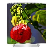Scarlet Mallow At Pilgrim Place In Claremont-california- Shower Curtain