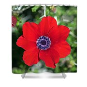 Red Anemone Coronaria 1 Shower Curtain