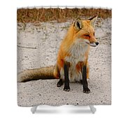 Red Fox 3 Shower Curtain
