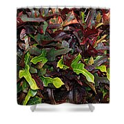 Red Green  Leaves Shower Curtain