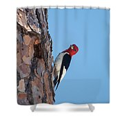 Red Headed Woodpecker Shower Curtain