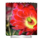 Red Hedgehog Shower Curtain