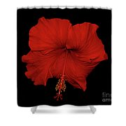 1- Red Hibiscus Shower Curtain