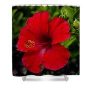 Red Hibiscus - Kauai Shower Curtain