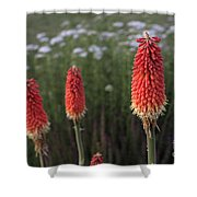 Red Hot Pokers Shower Curtain