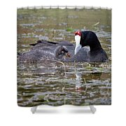 Red Knobbed Coot Shower Curtain