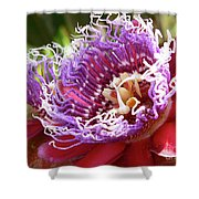 Red Lotus Shower Curtain