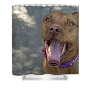 Red Nose Pitty Shower Curtain