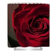 Red Rose Macro 6 Shower Curtain