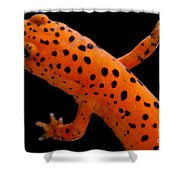 Red Salamander Shower Curtain