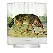 Red Texan Wolf Shower Curtain