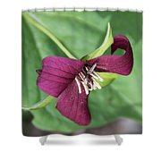 Red Trillium Shower Curtain