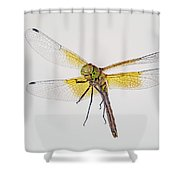 Red-veined Meadowhawk Shower Curtain