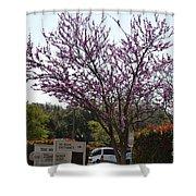 Redbud Tree  Shower Curtain