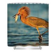 Reddish Egret With Fish Shower Curtain
