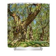 Relaxing Planes Trees Arbor Shower Curtain