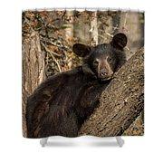 Resting Bear Shower Curtain
