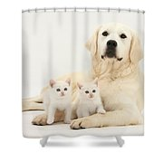 Retriever With Friendly Kittens Shower Curtain