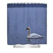 Rhapsody In Blue. Mute Swan Shower Curtain