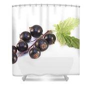Ribes Nigrum Isolated Shower Curtain