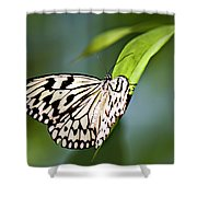Rice Paper Butterfly 5 Shower Curtain