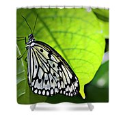 Rice Paper Butterfly 6 Shower Curtain
