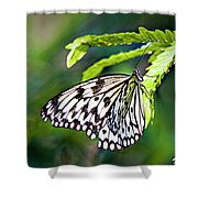 Rice Paper Butterfly 7 Shower Curtain