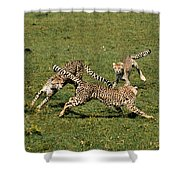 Ring Around The Cheetahs Shower Curtain