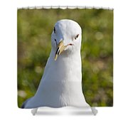 Ring-billed Gull Shower Curtain