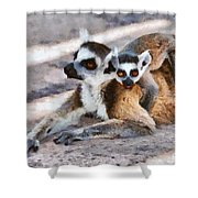 Ring Tailed Lemur With Baby Shower Curtain
