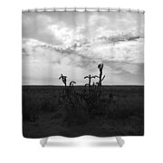 Rio Rancho Shower Curtain