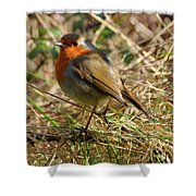 Robin In Hedgerow Shower Curtain