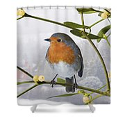 Robin On Mistletoe Shower Curtain