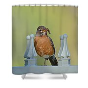 Robin With Worm I Shower Curtain