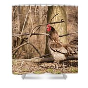 Rooster In The Woods Shower Curtain