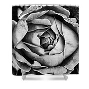 Rose Closeup In Monochrome Shower Curtain