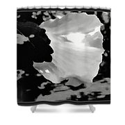 Rose Of Sharon In Black And White Shower Curtain