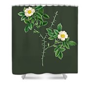 Rose145 Shower Curtain
